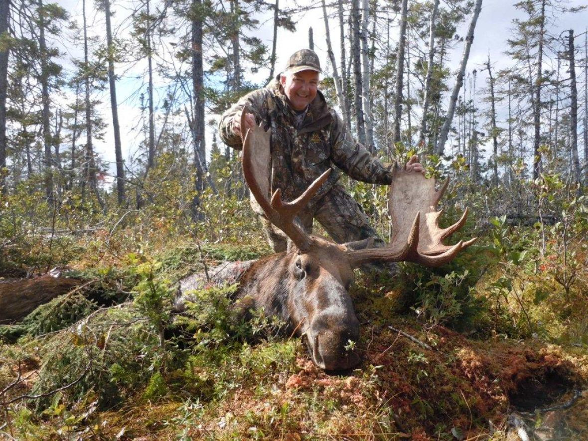 Hinterland Outfitters best moose hunting in Newfoundland